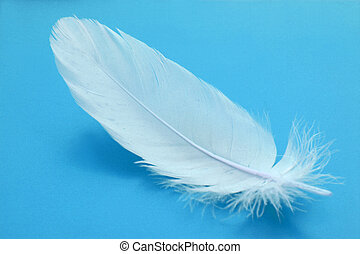feather close-up - small feather close-up on a light blue...