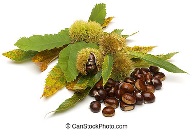 chestnuts - edible chestnuts on leaves close up on white