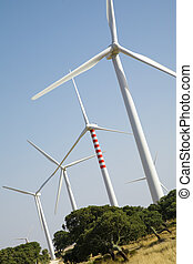 wind turbines - environmental conservation: wind turbines in...