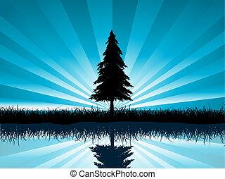 solitario, abeto, árbol