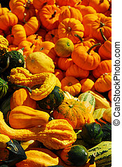 Pumpkins and gourds - Ornamental pumpkins on farmers market...