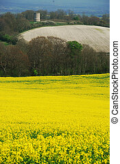 Rape field and old tower - England
