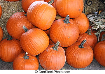 Pumpkins - View of a pile of pumpkins
