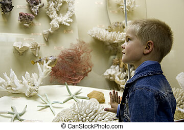 Studying Sea Life - Small boy examine corals in a museum