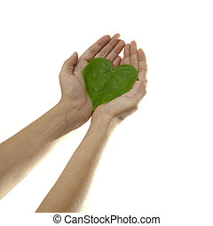Care for the plants - Isolated hands holding a heart shaped...