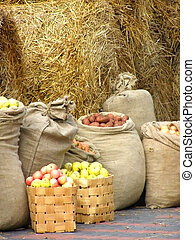 harvest - sacks of potatoes, apples,carrots,onion against...
