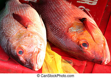 Fish market - Whole fresh raw fish presented for sale in...