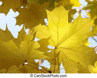 autumnal leaves 4