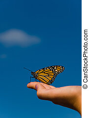 Monarch - a monarch butterfly on a hand with orange