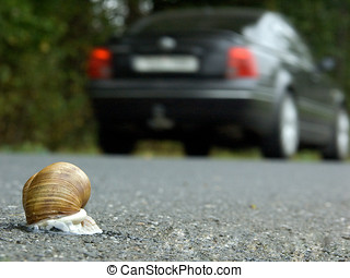 snail on road - life-threatening