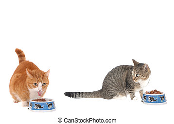 Two eating cat