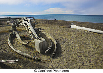 Whale bones - Various views and structures of whale bones in...