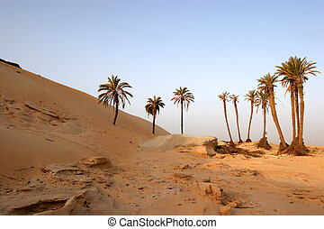 Sahara Desert, popular travel destination.