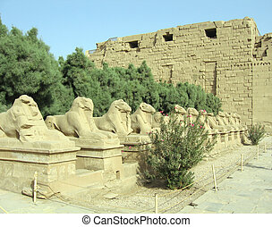 Avenue of ram-headed sphinxes - Avenue of Sphinxs at Karnak...