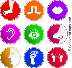 anatomy sign icons - collection of body part sign icons...