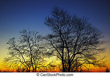 trees at sunrise - Silhouette of trees at sunrise