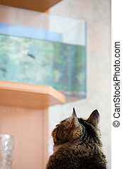 Cat and aquarium - Cat sitting and watching the aquarium...