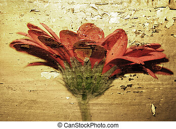 Grunge flower - Flower photo with grunge texture