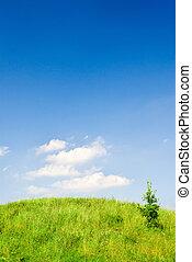 verde, collina