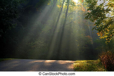 Sun Rays - Morning sun light rays piercing through the trees