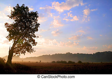 Morning Sun Rise - Single tree in the field in misty morning...