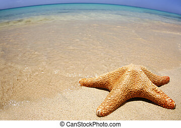 Wideangle Beach - Starfish on the beach with wide-angle...