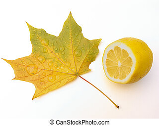 Leaf of a maple and lemon - Drops of water on a leaf of a...