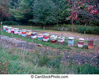 Bee keeping boxes - a colorful assortment of boxes for...