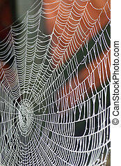 spiders home - nice spider web close up
