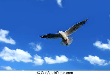 flying seagull - seagull flying against beautiful summer sky