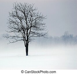 Solitude - Lone tree in the fog and mist