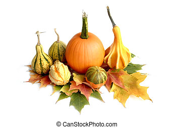 Pumpkin Arrangement - Pumpkins gourds and maple leaves...