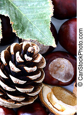 Cone and Chestnut isolated in white background