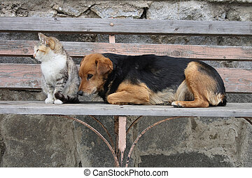 cat and dog - Cat and dog are resting together, they are...