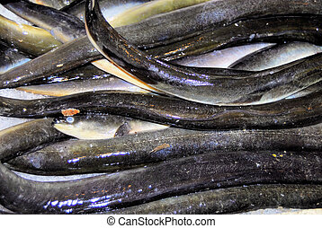 eel fish - slimy eel fish that is snakelike