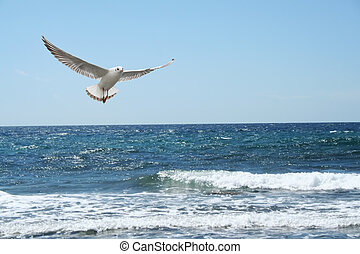 a beautiful seagul flying over the sea