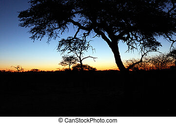 African Sunset - Beautiful african sunset , with acacia tree...