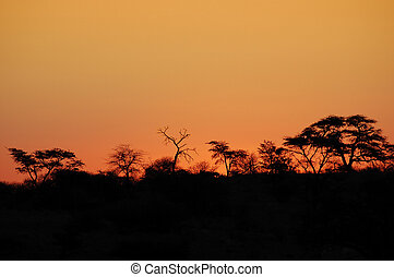 African Sunset - Beautiful african sunset, with acacia tree...