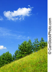 Summer hillside .