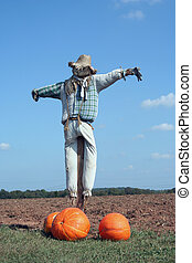 Scarecrow and pumpkins - A Scarecrow and pumpkins on a farm...