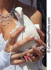 Wedding pigeons - There is very beautiful custom,-start...