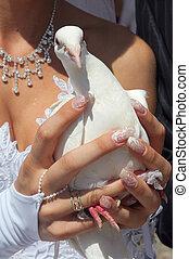 palomas, boda