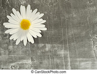 Background - Photo of a Paper Flower on a Paper Background -...