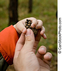 father and child - photo of father giving pine cone to child...