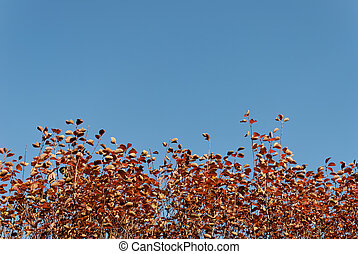 Autumn Background - Orange leaves in the lower part. The...