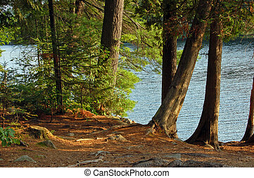 Lake shore - Campsite on the lake in Algonquin Park in...
