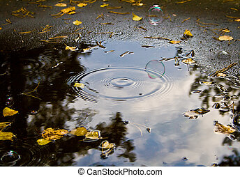 soap bubbles in the puddle - Photo of soap bubble under...