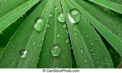 Leave in morning dew no1 - Leave with rain drops in morning...