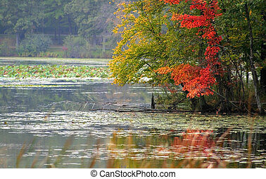 Colorful Trees near Lake - Colorrful trees by the lake shore...