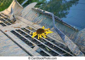 Muddy Four-Wheel Drive with Sunflower Helianthus anuus - Mud...
